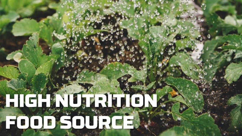 image-high-nutrition-food-source