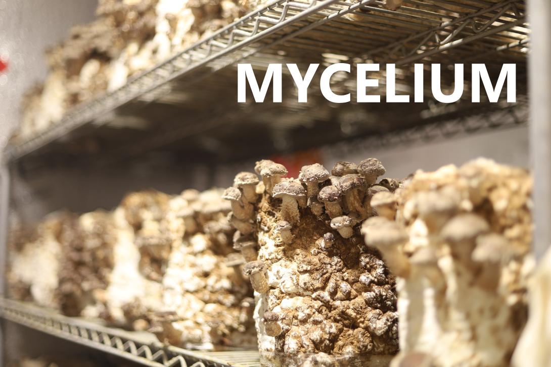nfiZ68sCcAp7BLcN-mycelium2
